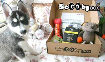 Scoobybox.com